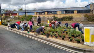 Community planting at Lowden Road