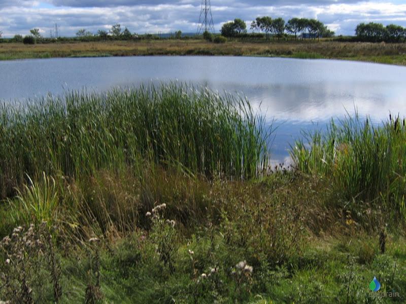 Retention Ponds