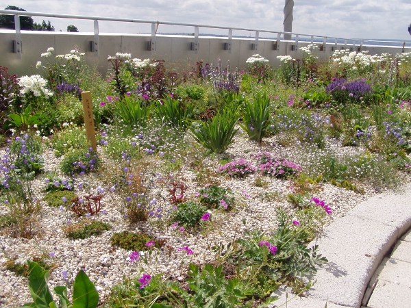 SuDS Green Roof