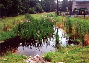 Figure 2 SuDS Constructed wetland